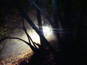 zajęcia nocne Awangardy w 2008 roku
