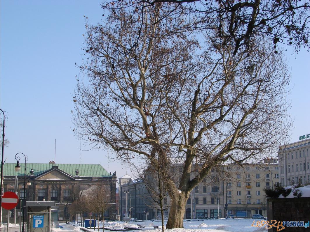 Kiedyś drzew było tu więcej  Foto:
