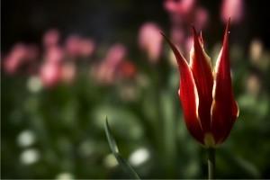 foto: sxc - kwiaty