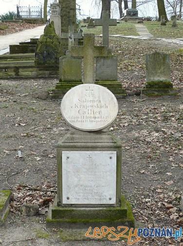 Grób Calierów na Cmentarzu Zasłużonych Wielkopolan