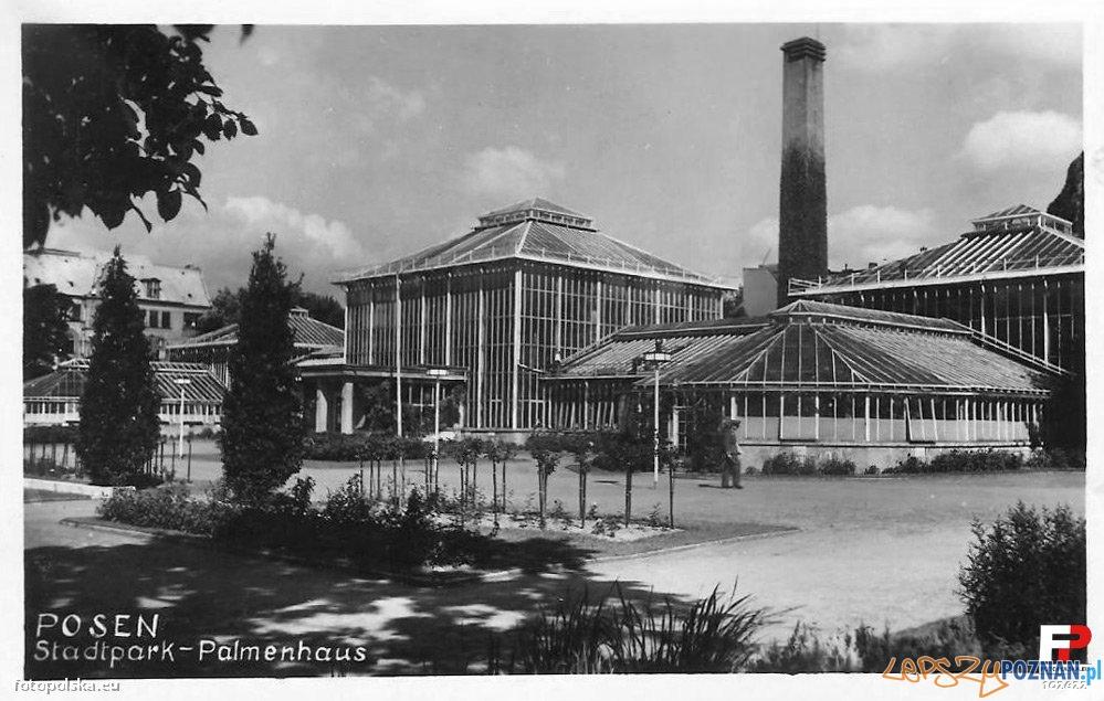 Palmiarnia Poznańska w roku 1942