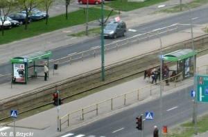 O koniu co nie chciał być osłem Foto: MPK / B. Brzycki