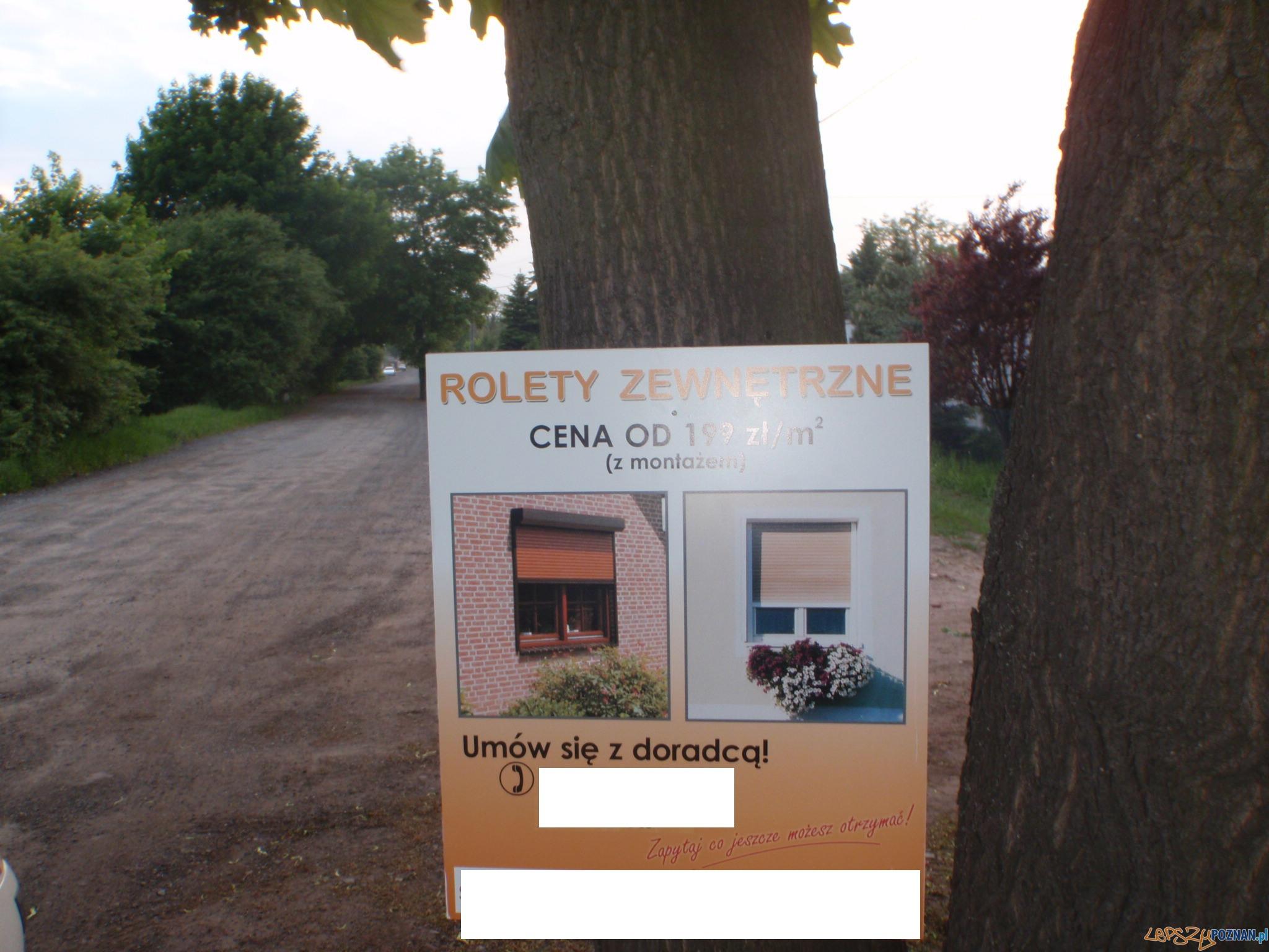 Okaleczone drzewo na Rumiankowej  Foto: SM w Poznaniu