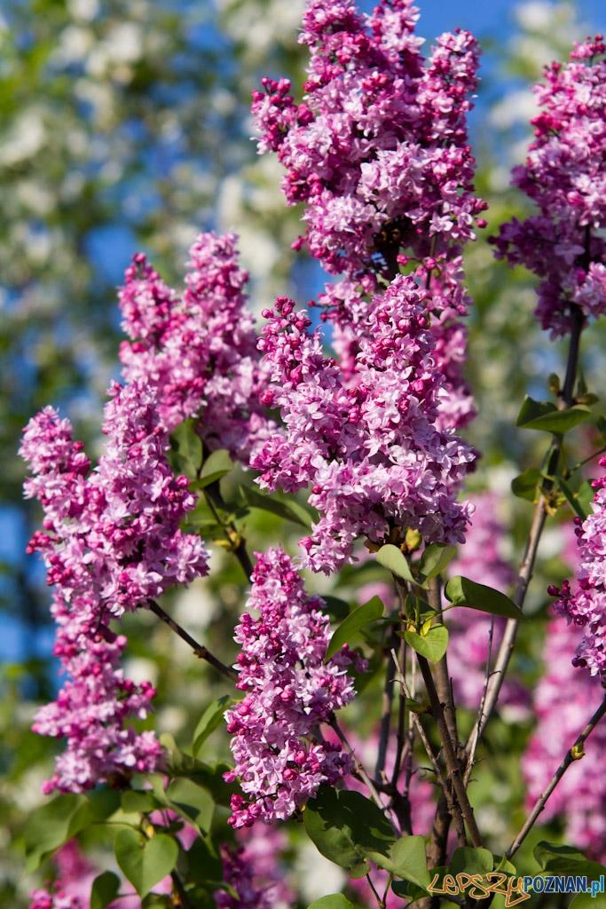 Ogród botaniczny - majówka 2011  Foto: lepszyPOZNAN.pl / Piotr Rychter