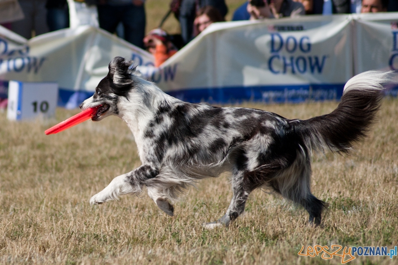 Dog Chow Disc Cup Poznań 2011 - 19.06.2011 r.  Foto: LepszyPOZNAN.pl / Paweł Rychter