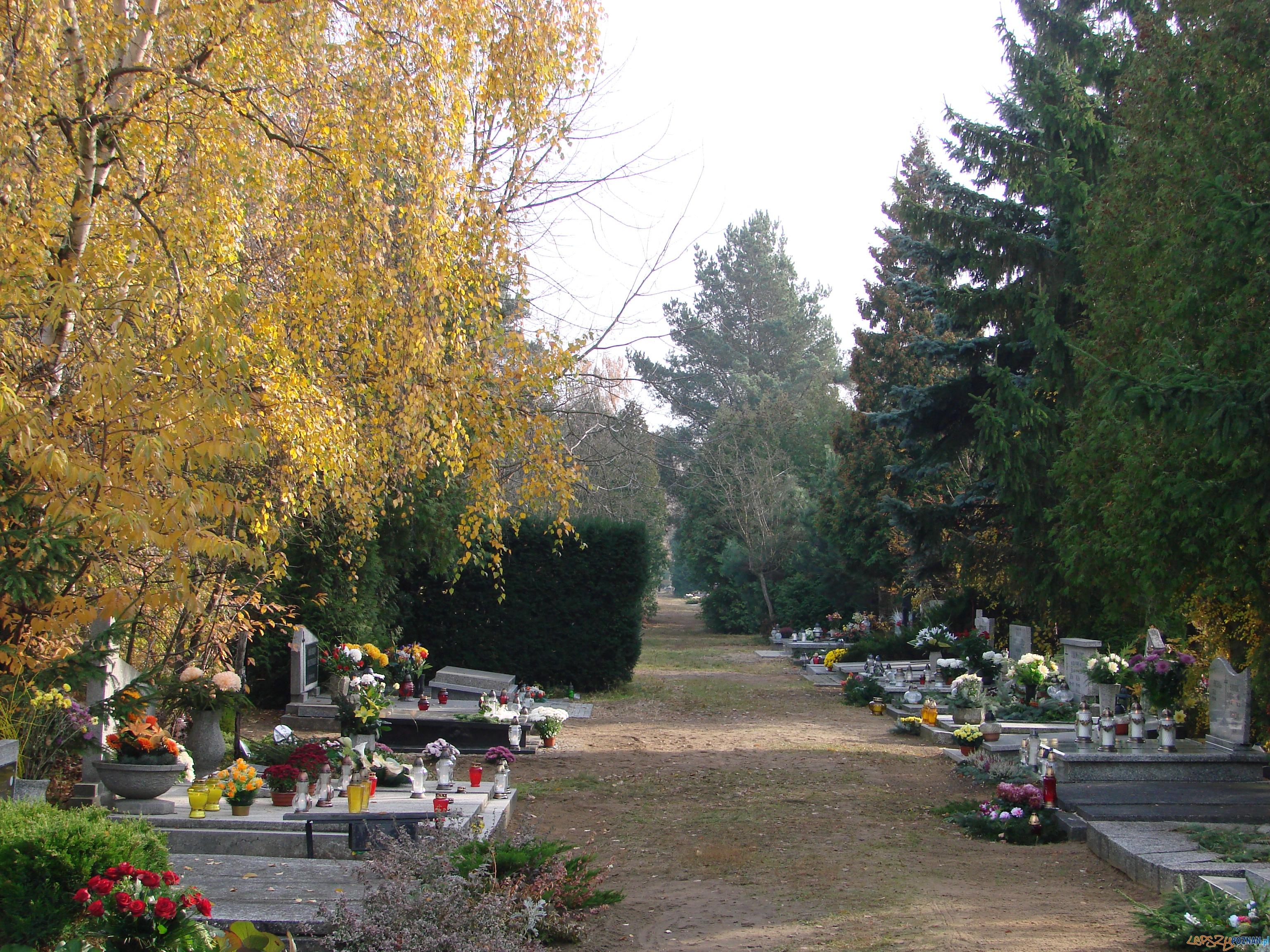 Cmentarz Junikowski  Foto: lepszyPOZNAN.pl / ag