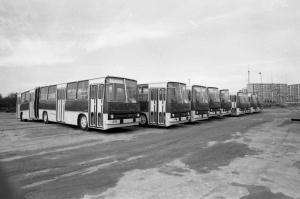 Ikarusy na Kaczej w 1981 roku