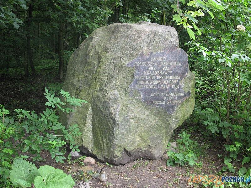 Głaz w Rezerwacie Przyrody Meteoryt Morasko Foto: wikipedia