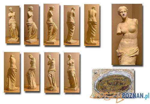 Wenus z Milo w Muzeum w Luwrze Foto: djęcie pochodzi z serwisu Flickr.com i jest udostępniane na licencji Creative Commons (użytkownik : hsivonen)