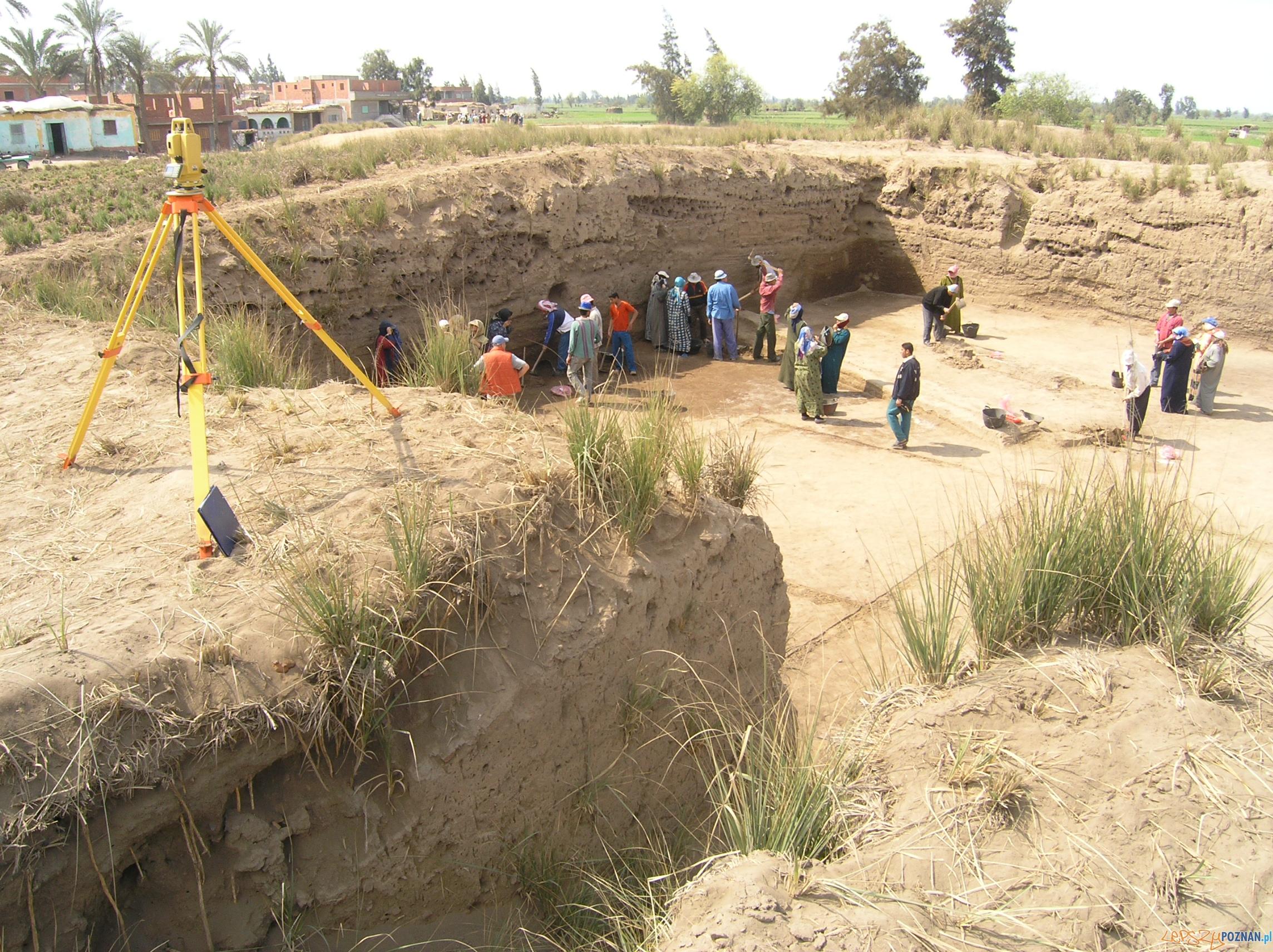 Wykopaliska w Tell El-Farcha  Foto: Muzeum Archeologiczne w Poznaniu