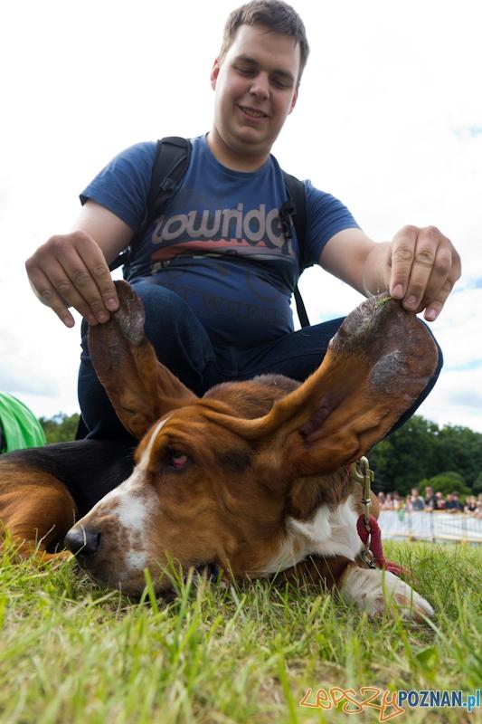Dog Chow - Latające psy. Poznań Cytadela. Najdłuższe uszy  Foto: lepszyPOZNAN.pl / Piotr Rychter