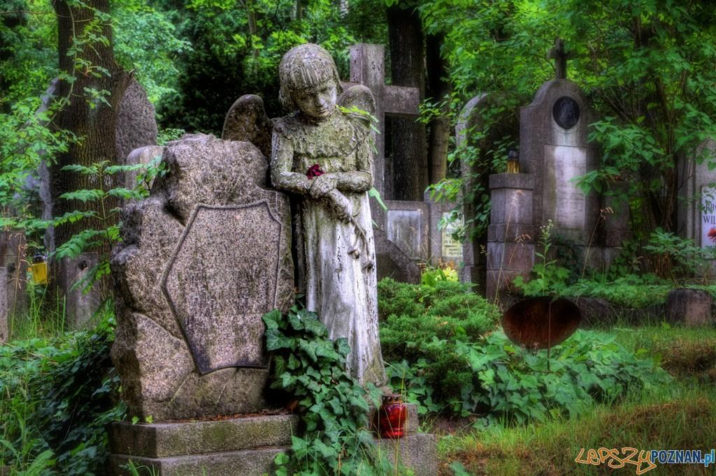 cmentarz na Nowinie