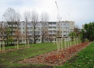 Nowa zieleń w okolicach ronda Starołęka Foto: ZDM