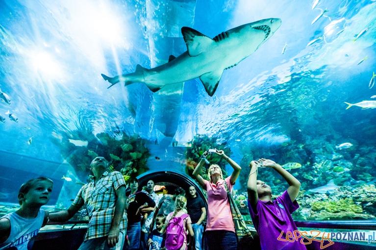 Shark. PRZYRODA I EKOLOGIA - nagroda Foto: Marek Lapis