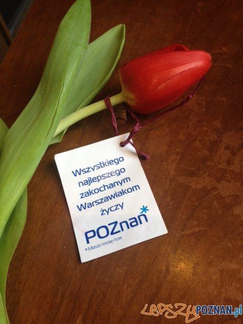 Walentynkowy tulipan  Foto: Sebastian