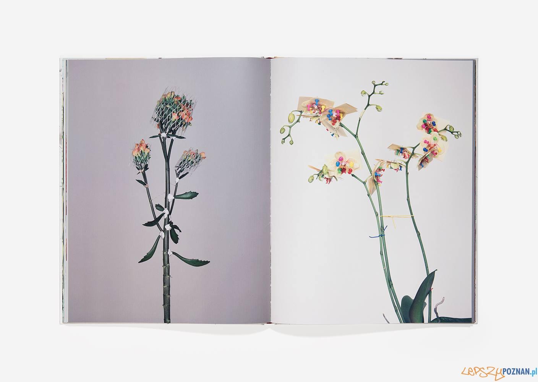 Demontaż kwiatów  Foto: Bownik