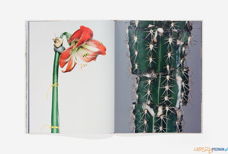 Rozbiór kwiatów   Foto: