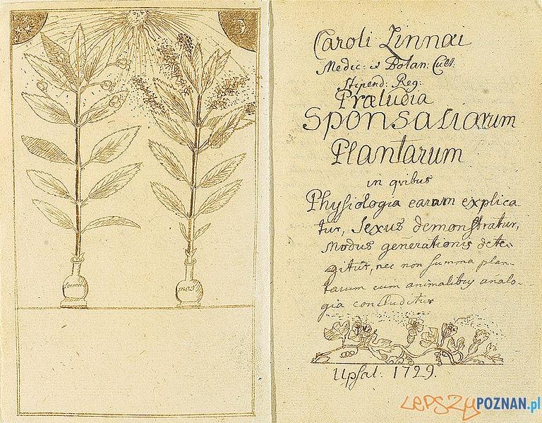 Praeludia_Sponsaliorum_Plantarum Linneusza Foto: cc