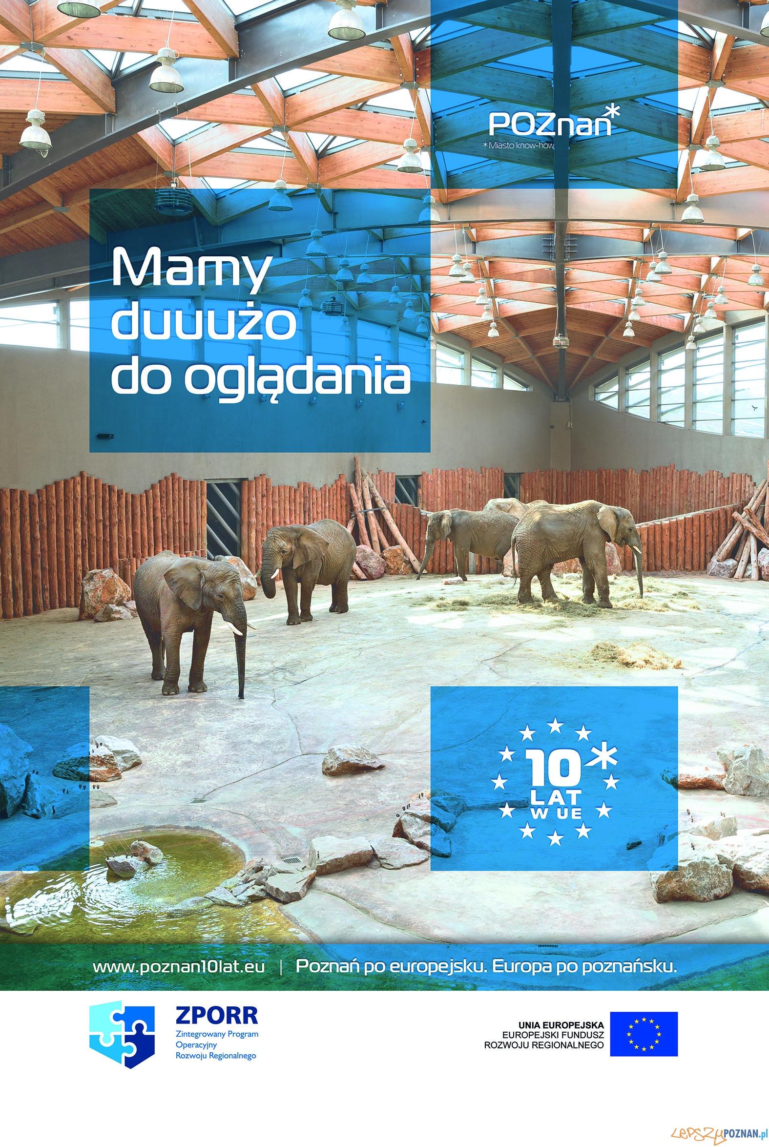 POZNAN citylight slonie  Foto: