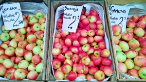 Jablka na Rynku Bernardyńskim Foto: TD
