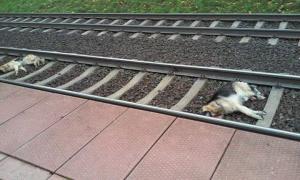 Zabite kejtry w Gułtowach Foto:  Straż dla Zwierząt w Polsce