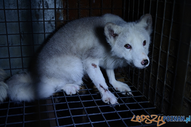 Animal Friendly Tour - ferma lisów  Foto: mat. prasowe