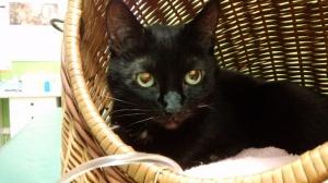 Kot w klinice weterynaryjnej Foto: Karolina