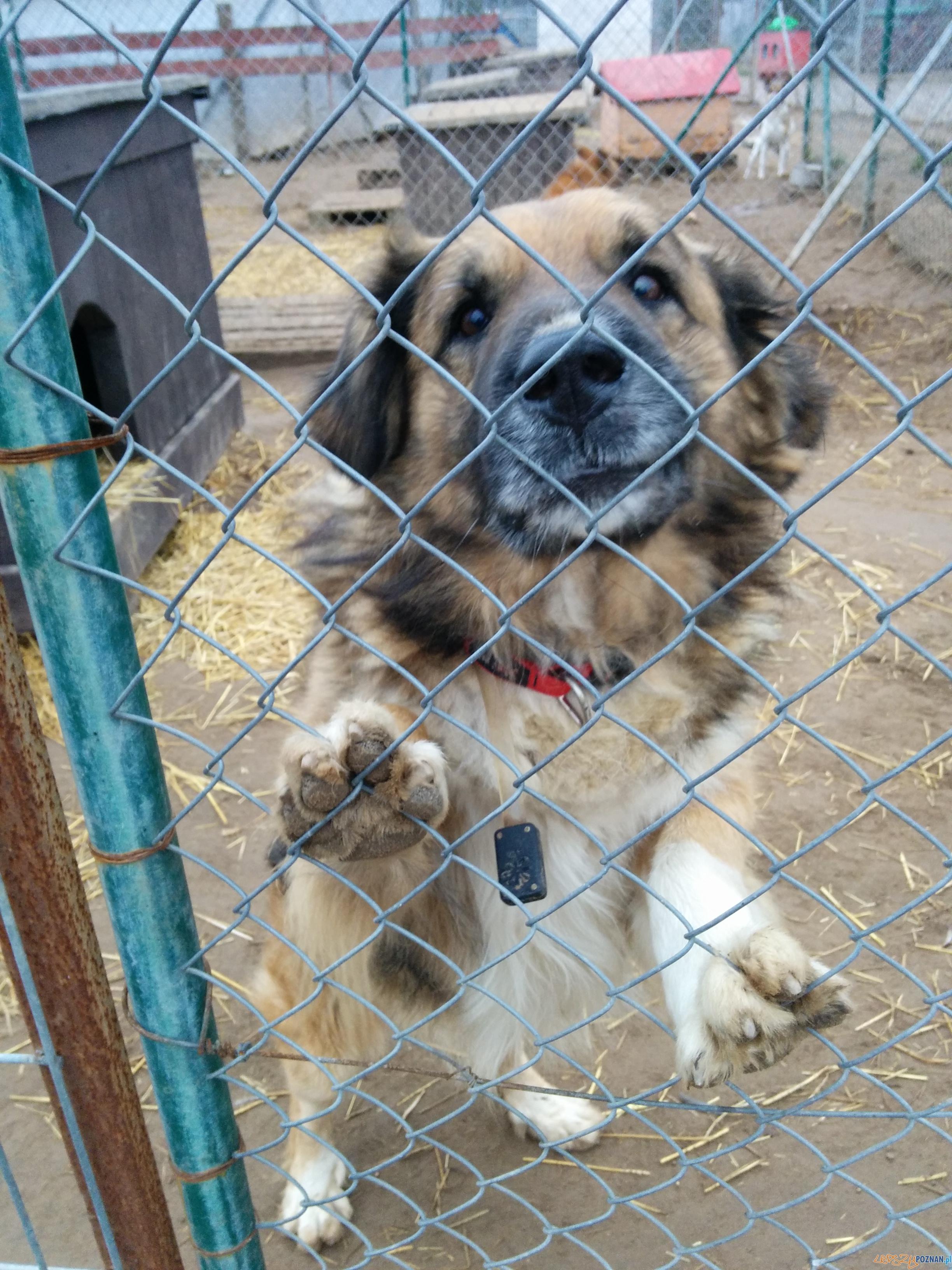 Pies ze schroniska czekający na dom  Foto: Wojciech Radomski (1)