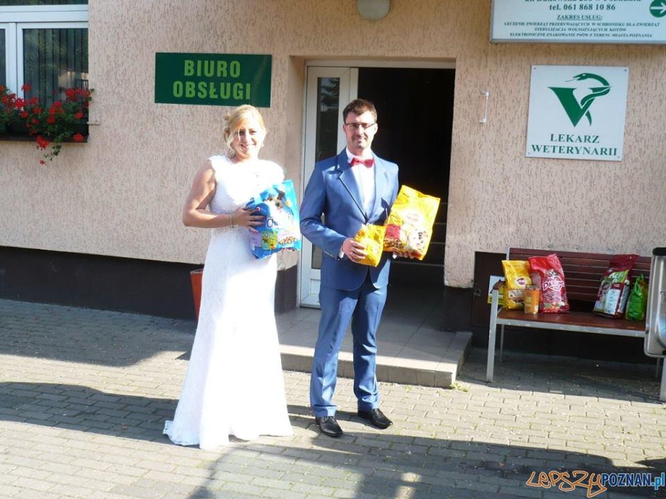 Monika i Michał poprosili swoich weselnych gości, by zamiast kwiatów przynieśli na ich wesele karmę dla zwierząt