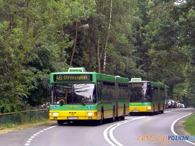 Autobus 46 do Strzeszynka