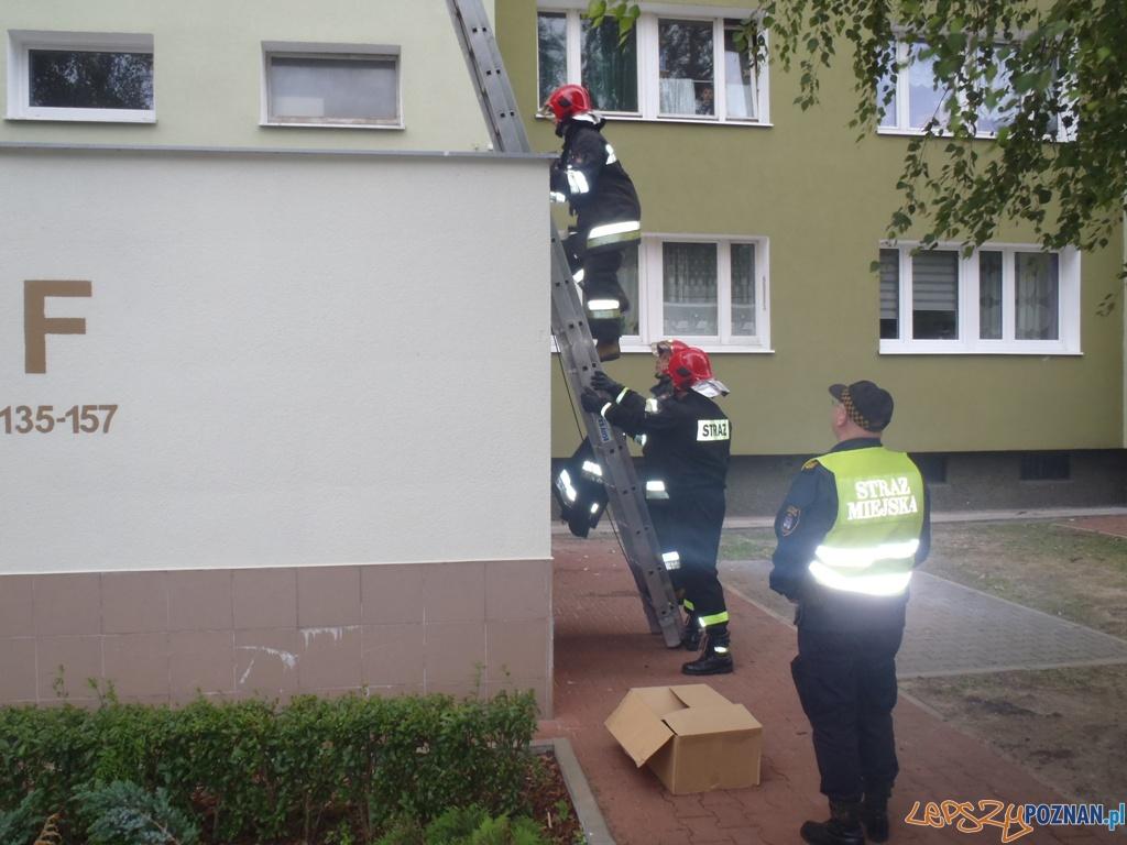 Strażacy ratują pustułki  Foto: Straż Miejska