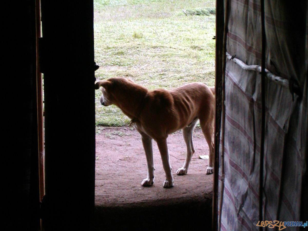 Wychudzony pies kejter  Foto: sxc / John Gardiner