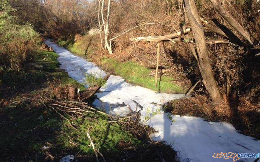 Zatruta rzeka - tym razem Głowna  Foto:
