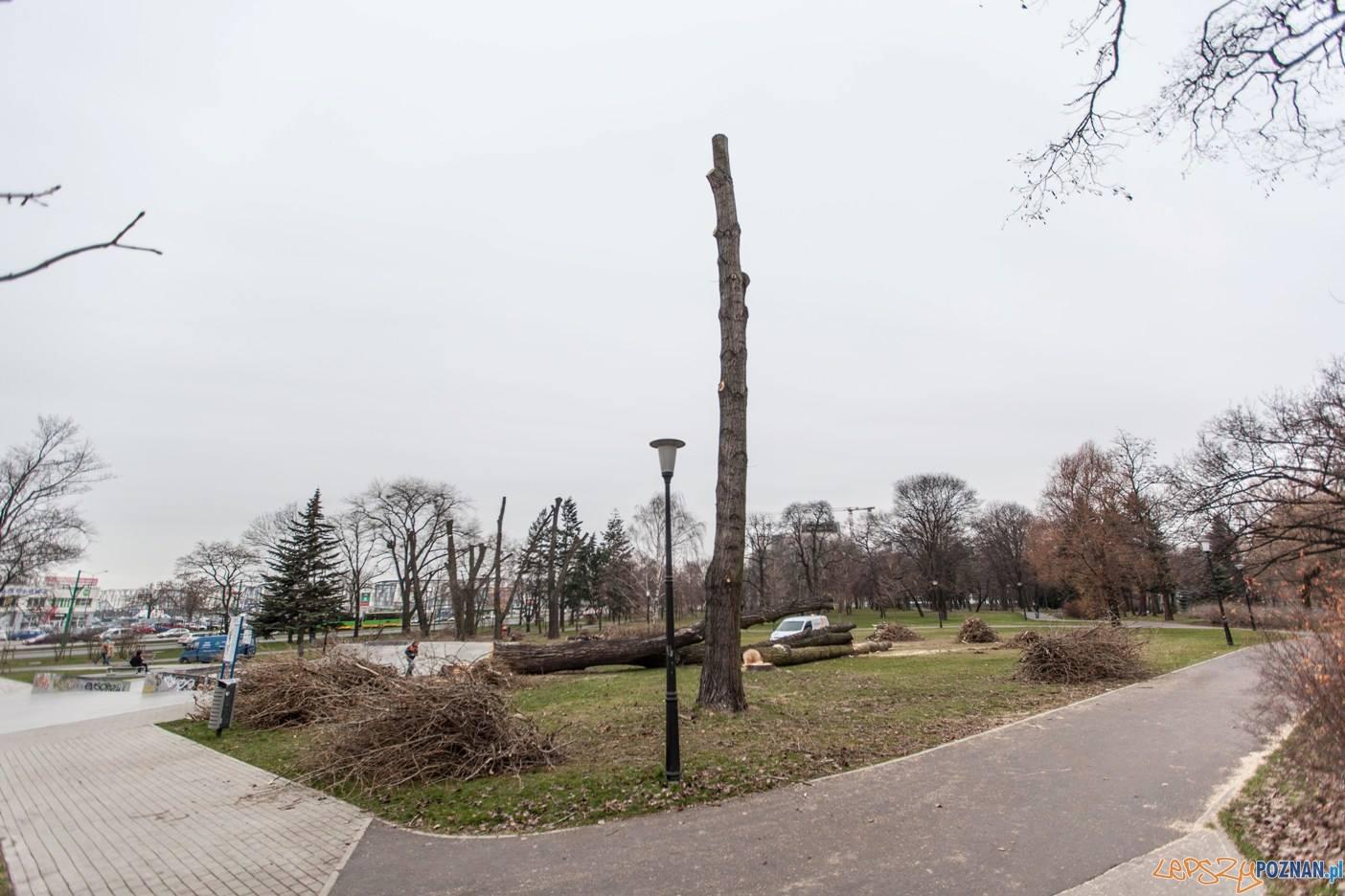 Wycięte drzewa (2)  Foto: Stowarzyszenie Prawo do Miasta