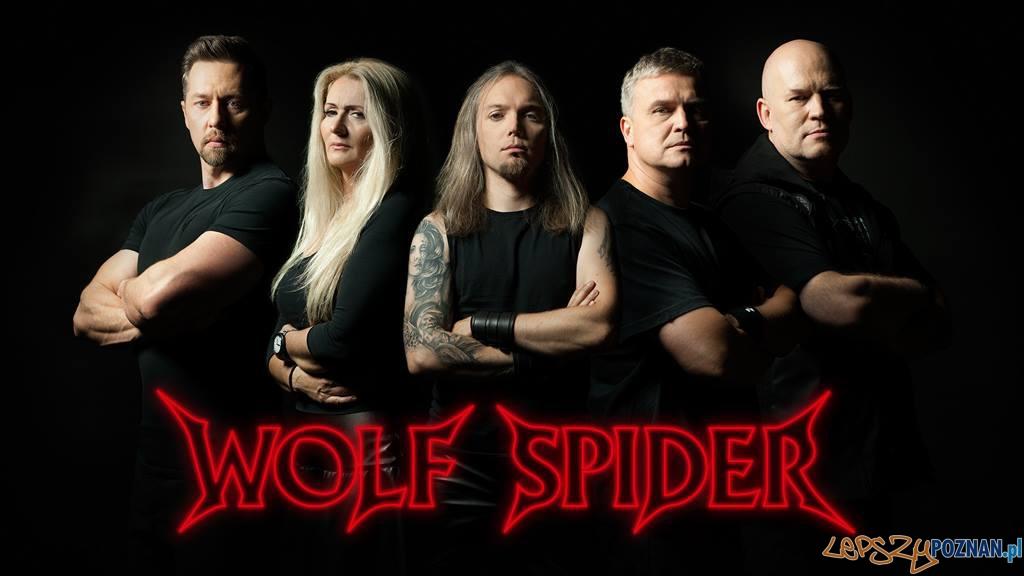 Wolf Spider  Foto: facebook