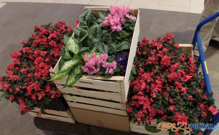 Kwiaty z PCC