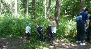 Sprzątanie tuleckiego lasu