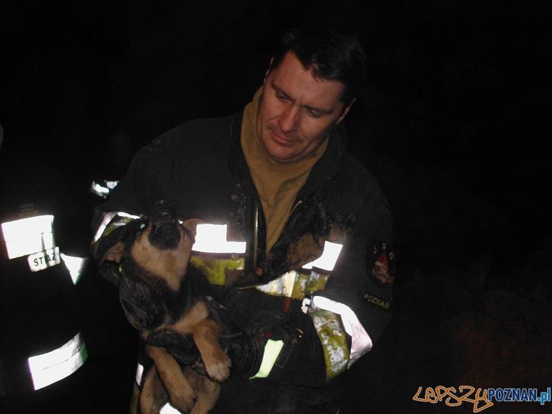 Uratowali szczeniaka, który utknął w... rurze  Foto: OSP Dakowy Suche