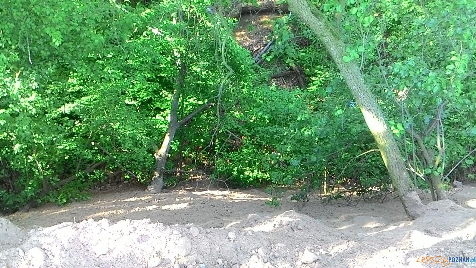 Wywrotką do lasu - nielegale śmieci  Foto: Straż Miejska