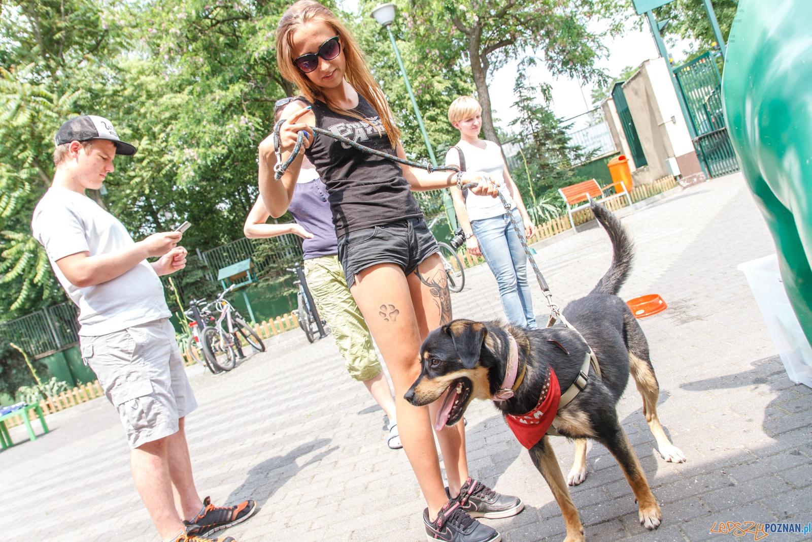 52 urodziny Schroniska dla zwierząt w Poznaniu - Poznań 04.06.  Foto: LepszyPOZNAN.pl / Paweł Rychter