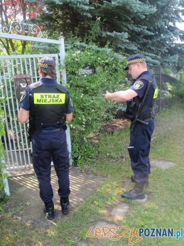 Kontrole Straży Miejskiej w Kiekrzu