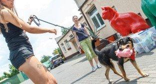 52 urodziny Schroniska dla zwierząt w Poznaniu - Poznań 04.06.2016 r.