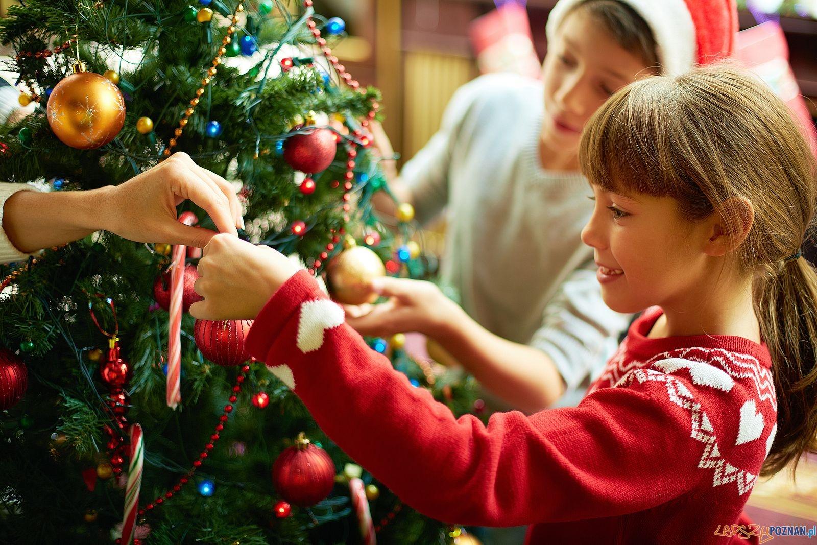 Choinka - Boże Narodzenie  Foto: Biuro Podróży Tripsta