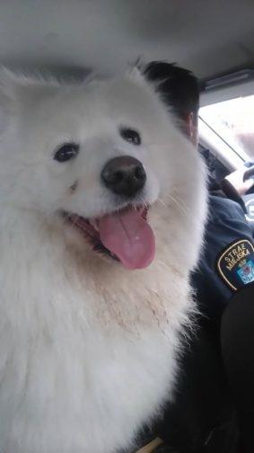 Straż znalazła psa