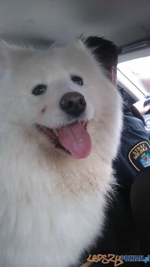 Straż znalazła psa  Foto: SM