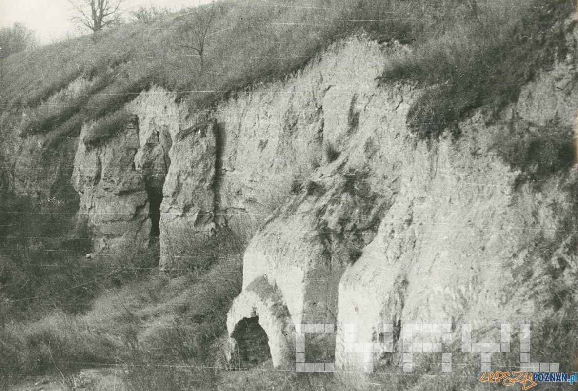 Pozostałości fortu Winiary, prawdopodobnie rawelinu II (obecnie rosarium) około 1962 roku  Foto: Cz. Czub / MKZ / Cyryl