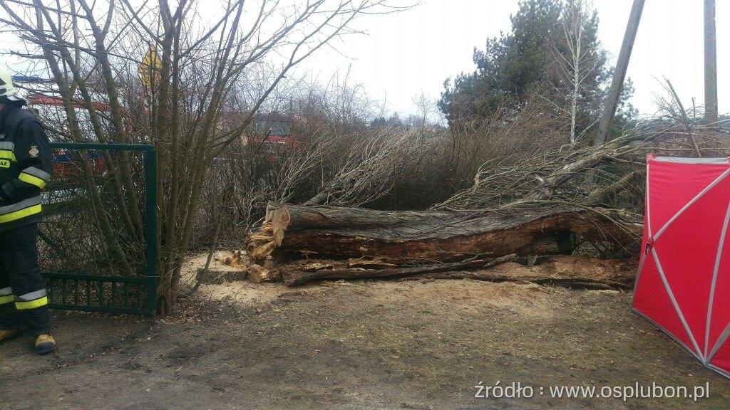 Śmiertelna ofiara wycinki drzew!
