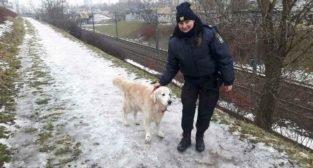 Interwencje Straży Miejskiej - pies biegający wzdłuż trasy PST