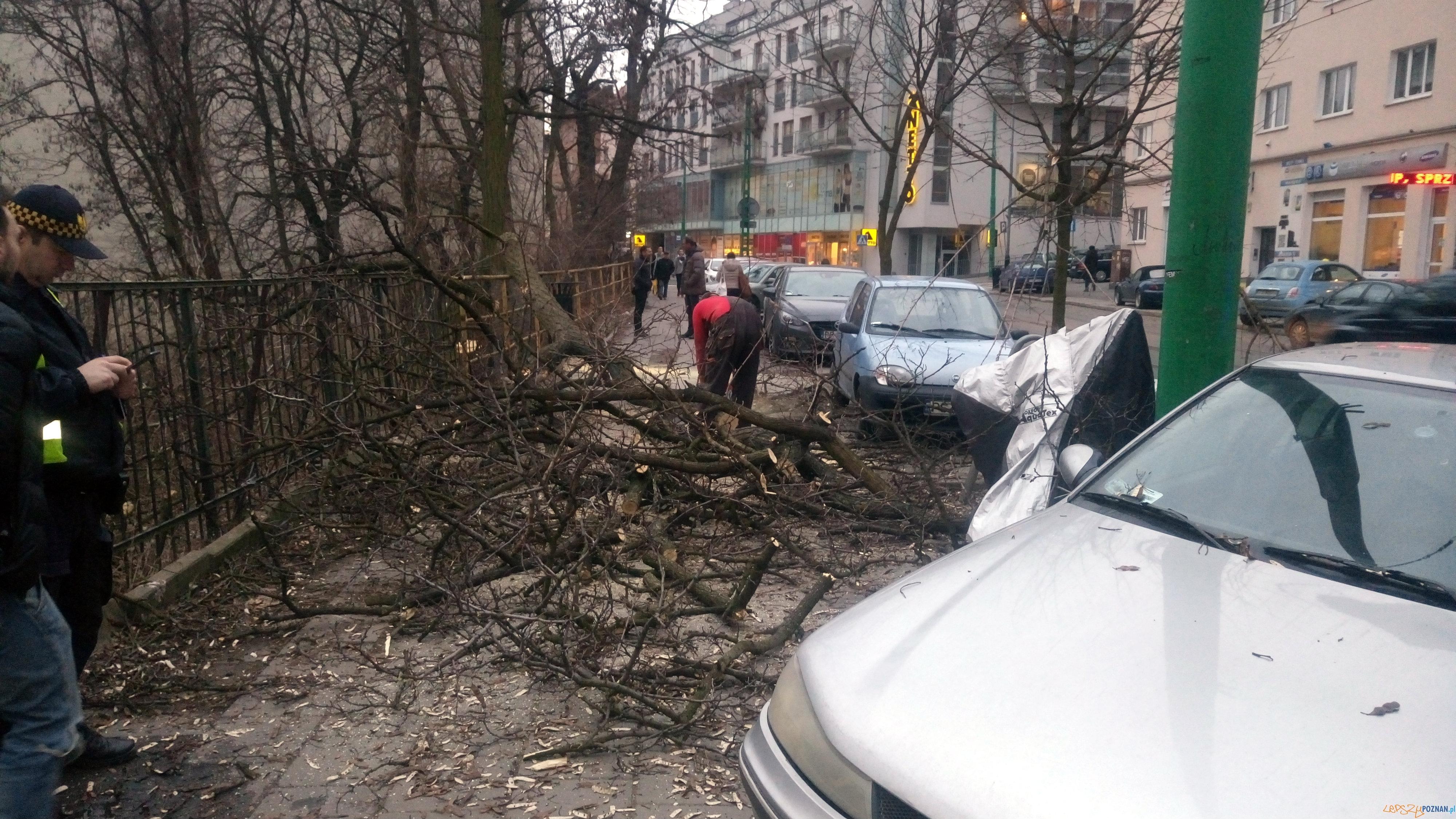 Niebezpieczne wycinki drzew na Wildzie  Foto: Straż Miejska Miasta Poznania