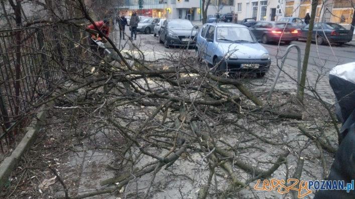 Niebezpieczne wycinki drzew na Wildzie